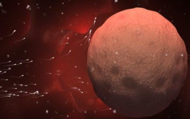 Увеличиваются ли яичники после овуляции